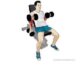 Haltère et banc pour la musculation des biceps