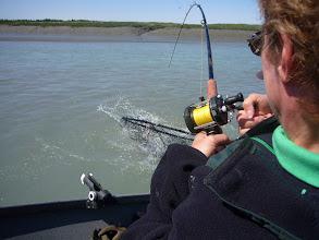 Photo: A lucky Alaska Drift Away Fishing client bringing a Kasilof king salmon to the net.