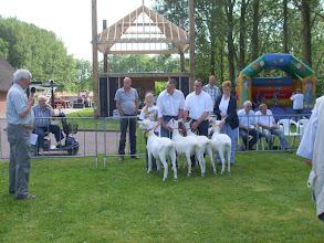 Photo: Rubriek 5: witte lammeren geboren in januari 2012.  1a. Nooro's Corrie 18, 1b. Nooro's Femke 39. 1c. Lieke van de Dijk, 1d. Nooro's Femke 40.