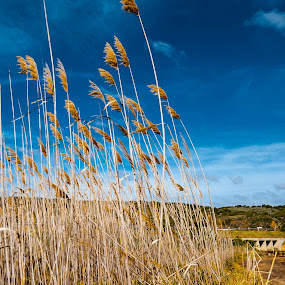 Weeds by Stephen Fouche - Nature Up Close Trees & Bushes ( clouds, sky, grass, bushes, weeds )