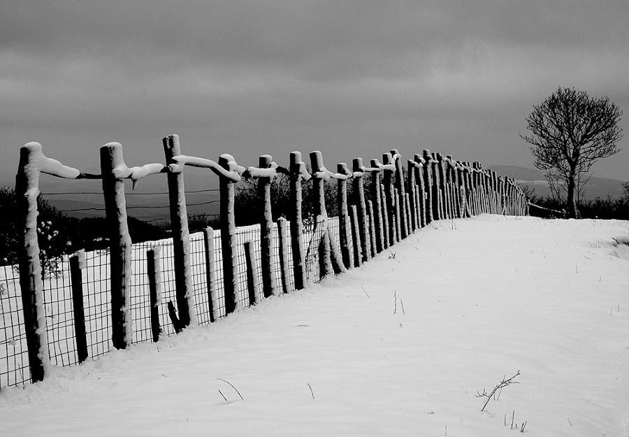 by Károly Pató - Landscapes Prairies, Meadows & Fields ( mono-tone, b&w, black and white, b and w, black and white collection, landscape, monotone )