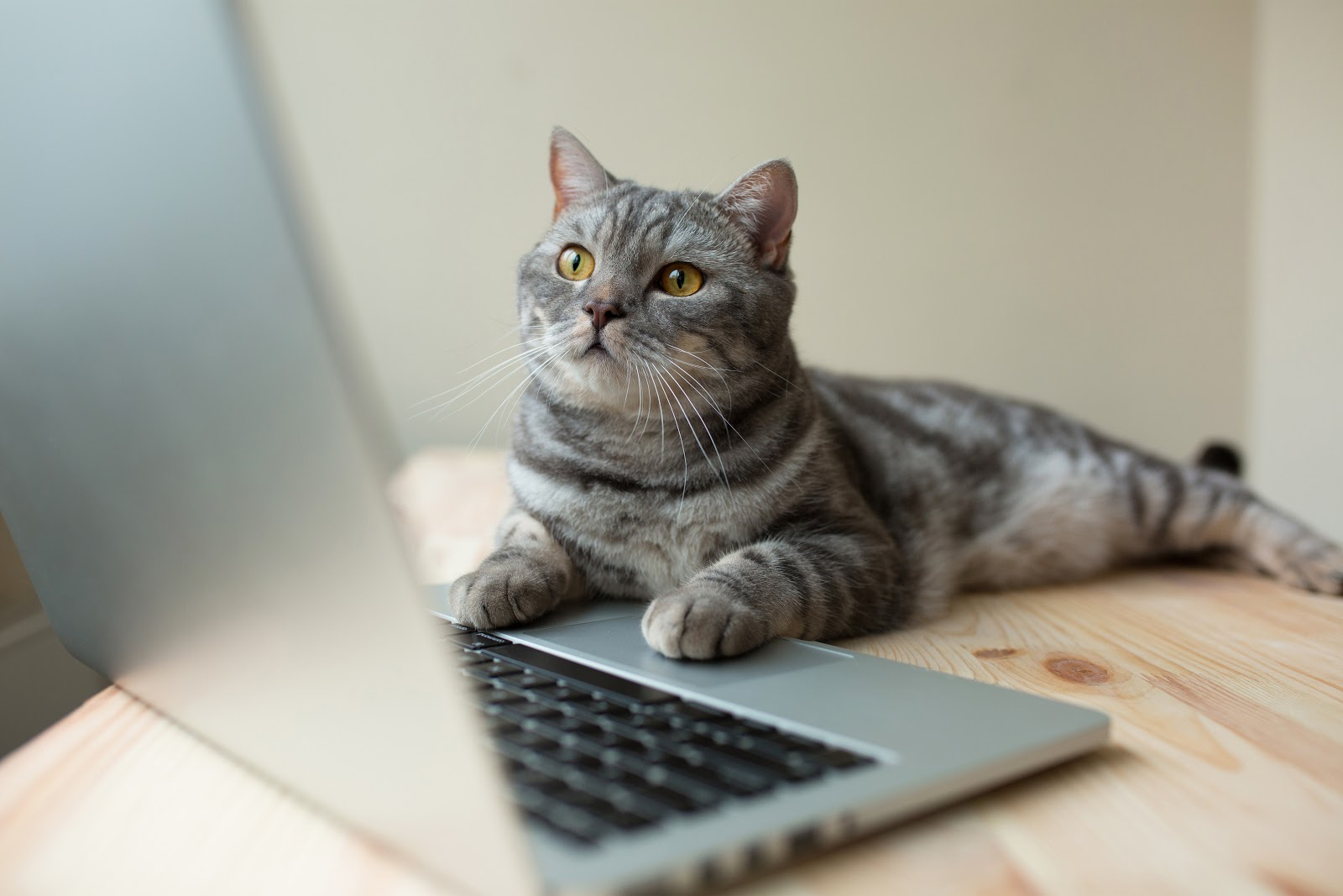 cat using computer