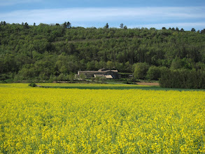 Photo: Today we pass yellow fields (moutard?) ...