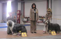 "Photo: Specialty Show ""EURO CUP"" Bratislava, SK 1st place, judge: Mrs. I. Muzslai/H Sunday, October 5, 2003"