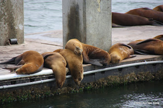 Photo: (Year 3) Day 20 - Seals Sunbathing #1