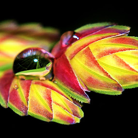 Helping Hands by Steven Butler - Nature Up Close Leaves & Grasses ( waterdrop, nature, foliage, leaves, flower, water drop )