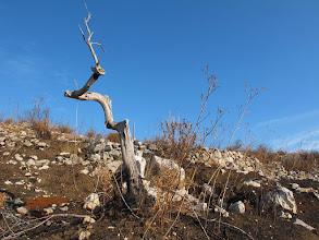 Photo: scheletri di alberi lungo il Vuallariello