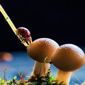 Touchdown by Anton Subiyanto - Nature Up Close Mushrooms & Fungi ( mushroom, macro, fungi, nature, micro, insect, close up )