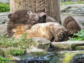 Photo: Knut treibt ein wenig Hintertatzengymnastik ;-)