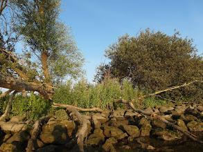 Photo: Oever op weg naar het puntje van de Hoeksche Waard