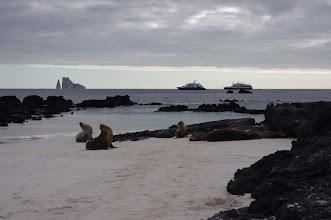 Photo: Sea Lions, Sleeping Lion Rock and ships on horizon