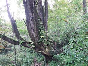 大木が多く見られる