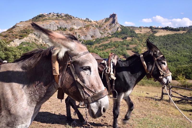 A dorso di mulo di Genovese