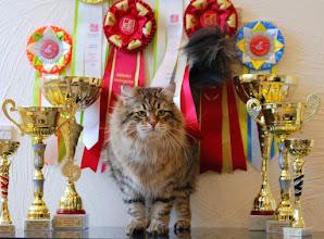 Photo: BEST IN SHOW, BEST CAT II category, BOB I Int. FIFe show, Winnitsa 2015