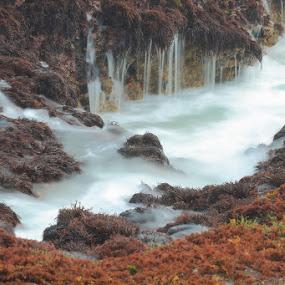 water flow by Jayadi Salim - Nature Up Close Flowers - 2011-2013