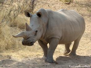 Photo: #011-Rhinocéros blanc à Epako