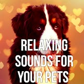 Relaxing Sounds for Your Pets – Pet Relaxation, Stress Relief, Calm Down Your Animal Companion, Music Therapy for Dogs, Sleep Aids