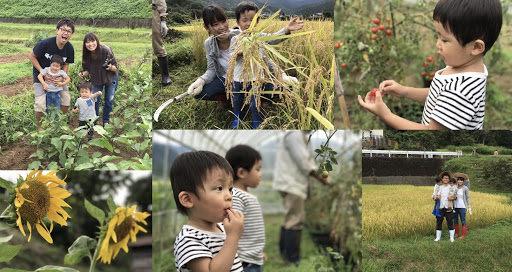 伊豆の農家さんで無料の収穫体験♪のメイン写真