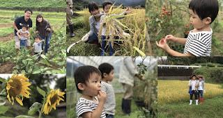 伊豆の農家さんで無料の収穫体験♪の写真