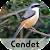 Master Kicau Cendet Juara file APK for Gaming PC/PS3/PS4 Smart TV
