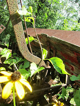 Photo: Broken, chipping wood and rusted metal overrun with flowers and leaves in the machine graveyard at Carriage Hill Metropark in Dayton, Ohio.