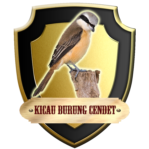 Download Kicau Burung Cendet Free For Android Kicau Burung Cendet Apk Download Steprimo Com
