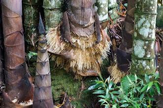 Photo: Kambira Tana Toraja (Sulawesi)  En Kambira visitamos un árbol muy grande en el que están enterrados 20 bebés. Según la definición toraja, un bebé es un niño al que todavía no le han crecido los dientes. Los bebés son enterrados en posición vertical –no horizontal- y se cree que continuarán creciendo con el árbol.   Lunes 23 de marzo de 2015