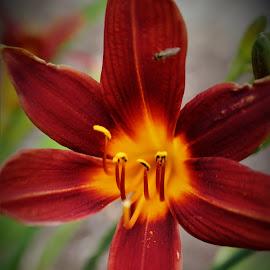 by Michelle Brush - Flowers Flower Gardens