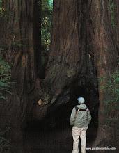 Photo: Dwarfed by the California redwoods.