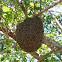 Honey bee (hive)
