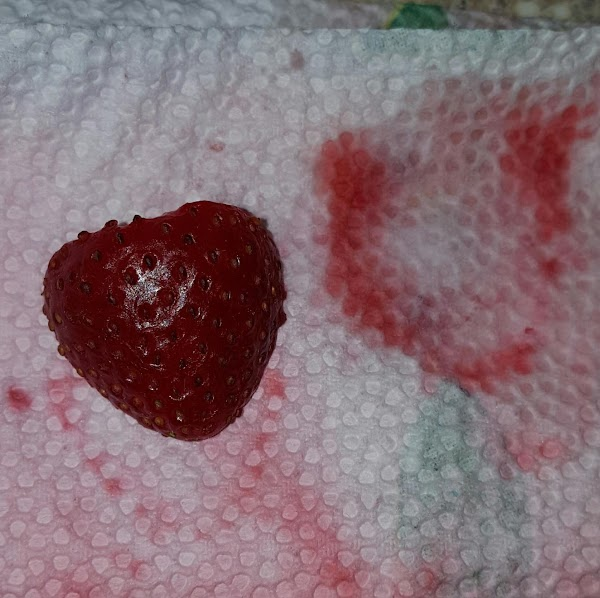 Rinse strawberries with cold water,cut top off,then cut in half. Using a paper towel,pat...