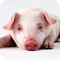 Little Pig Live Wallpaper icon