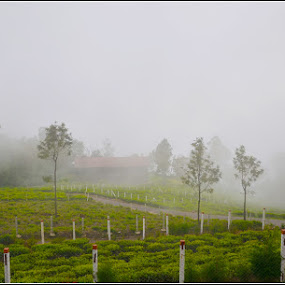 Misty Morning by Manabendra Ghosh - Landscapes Prairies, Meadows & Fields