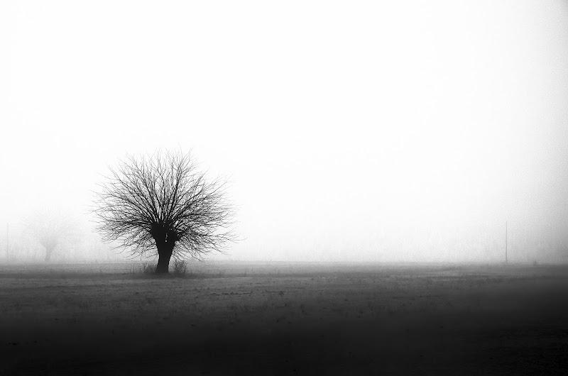 Natura in mezzo alla nebbia di sergio_di