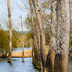 Flooded Trees by João Pedro Ferreira Simões - Nature Up Close Trees & Bushes ( water, flood, trees, lake, portugal )