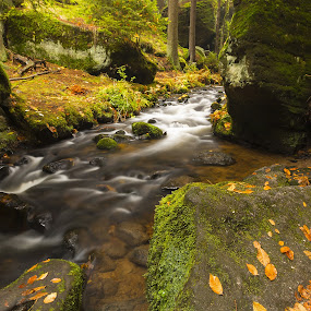 Autumn creek in the national park Czech Switzerlan by Petr Musil - Nature Up Close Water ( water, national park, autumn, green, czech republic, switzerland, rock )
