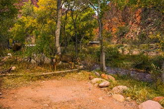 Photo: Our campsite at the bottom of the Grand Canyon Nation Park, Arizona, USA