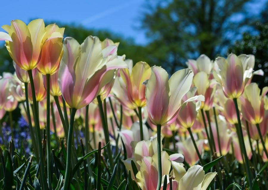 by Vishal Bhatnagar - Flowers Flowers in the Wild (  )