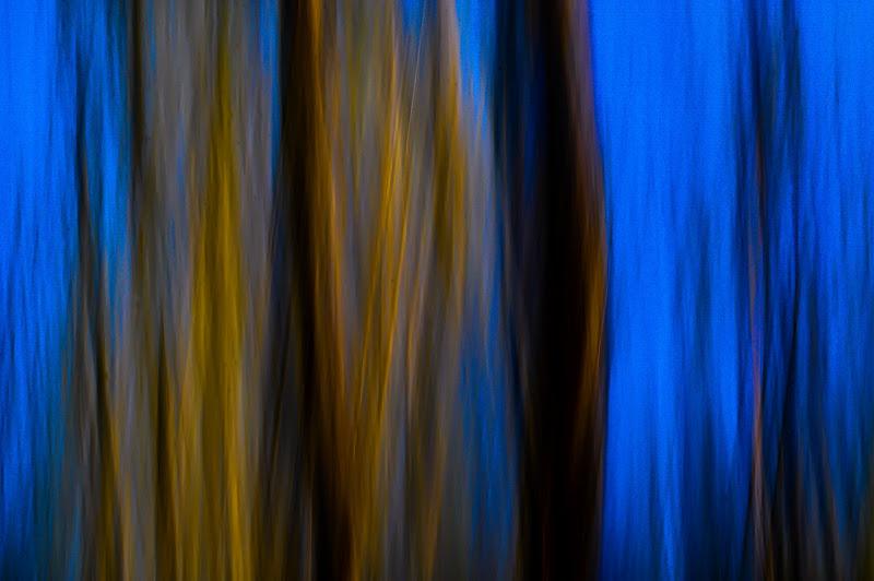 Fa più rumore un albero che cade che una foresta che cresce. (Lao Tzu) di kaos