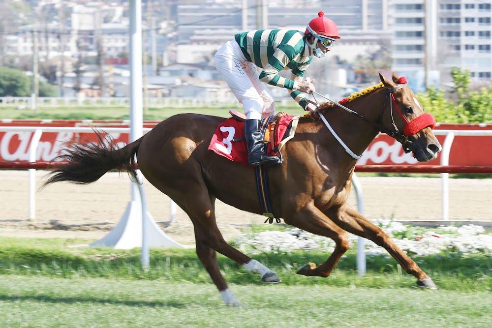 Baqueano regresa a su pista para continuar con el gran momento de Las Camelias