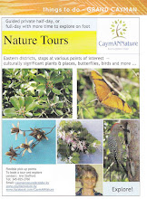 Photo: Grand Cayman NATURE TOURS with Ann Stafford Half day or Full day http://www.caymannature.ky/Nature_Tours.html Email: caymannature@candw.ky