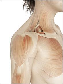 A woman's shoulder muscles.
