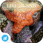 Live Jigsaw - Secret Tidepools