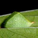 Caterpillar moth