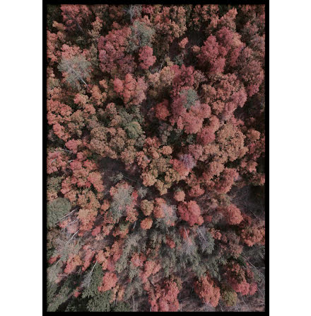 Poster, Autumn Woods