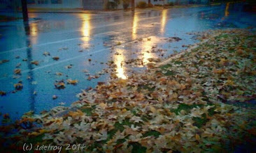 Photo: Grateful for a rainy evening walk him me in the leaf strewn walkway.