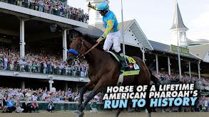 Horse of a Lifetime: American Pharoah's Run to History thumbnail