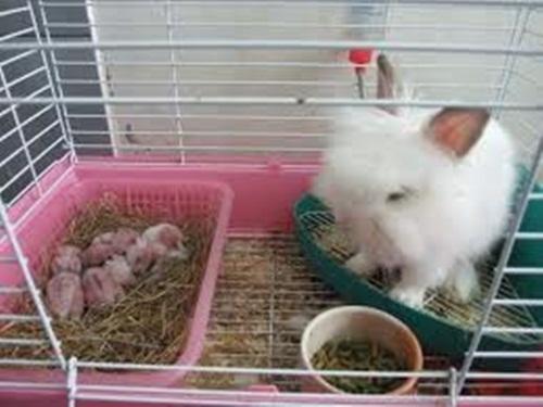 ผลการค้นหารูปภาพสำหรับ กระต่ายการเลี้ยงในบ้าน