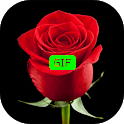Flowers And Roses Animated Images Gif pictures 4K icon