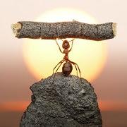 К чему завелись муравьи в доме